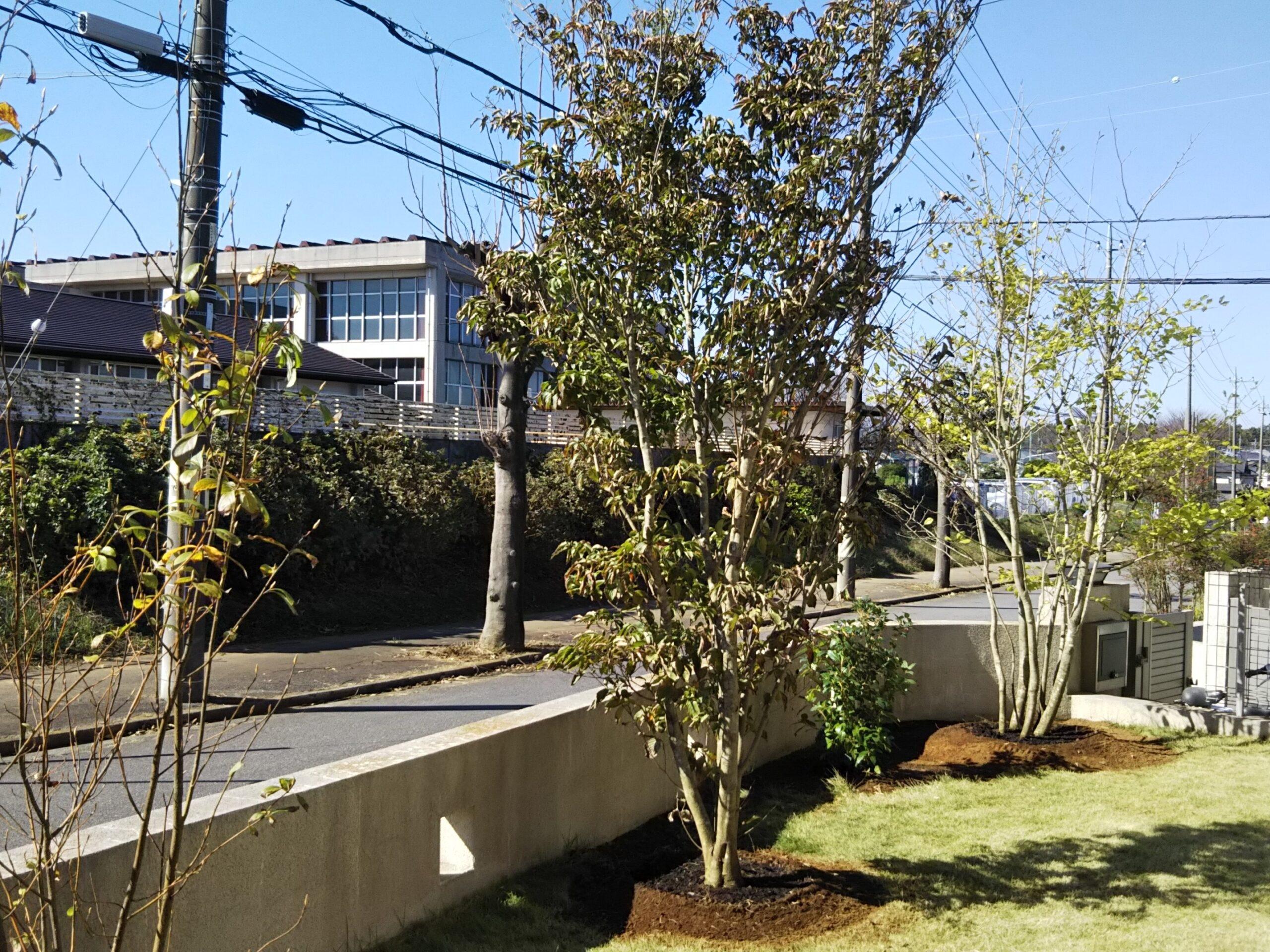 【龍ケ崎市 S様邸】 コニファー列植の庭から明るい雑木の庭へ、リガーデン!