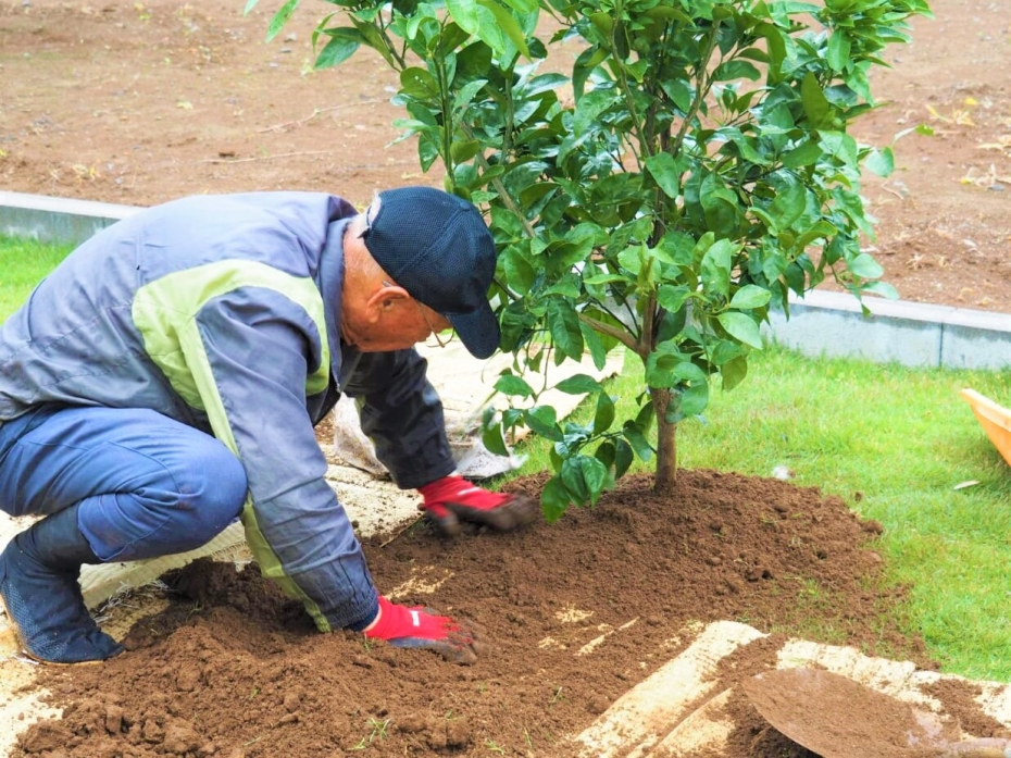 【つくば市 N様邸】 こだわりの地中海テイストのご自宅にぴったりの果樹2本を植栽!