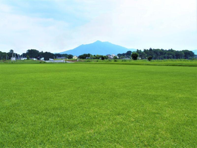日本一の芝の産地・つくば。「つくばグリーン」や「TM9」など、話題の芝をご紹介!